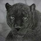 Black Leopard drawing by Istvan froghunter