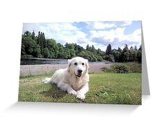 Holly by Rover Ness Greeting Card