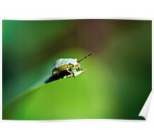 Little green bug - Macro Poster