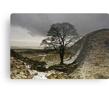 Sycamore Gap at Hadrians Wall Metal Print