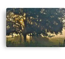 Cypress Fog Canvas Print