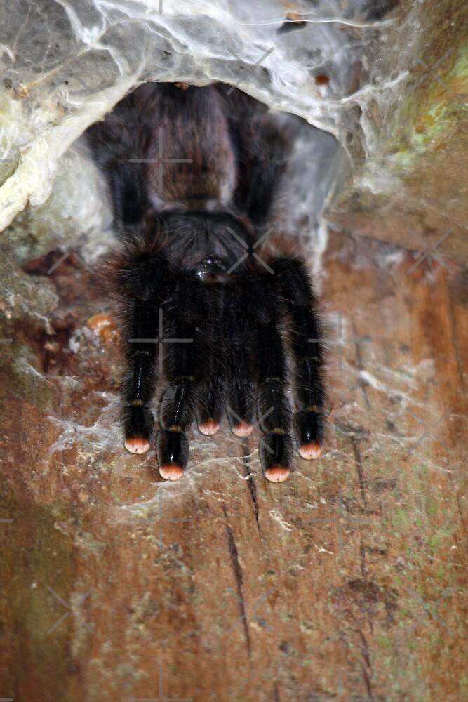 pink mittens by gruntpig