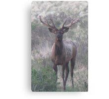 bull elk challenge Canvas Print