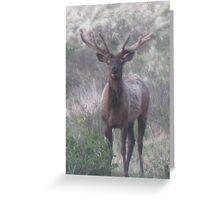 bull elk challenge Greeting Card