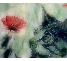 Kitty in the poppies Photographic Print