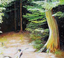 Light in the woods, Lake Umbagog, Maine by P. Leslie Aldridge