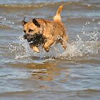 Sid, The Amazing Flying Dog! by Dorothy Thomson
