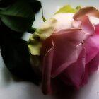 Soft Pink by Kim Slater