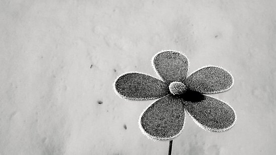 Frosty Flower by RevJoc