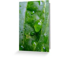 Water Drop Magnifying Glass Greeting Card