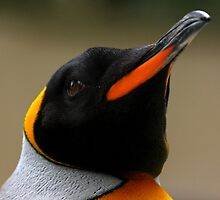 King Penguin Portrait by Mark Hughes