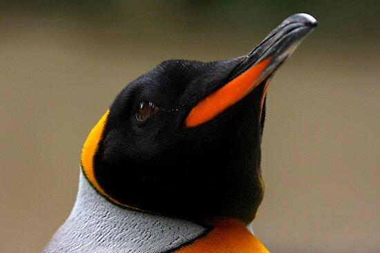 King Penguin Portrait by Mark Hughes