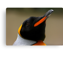 King Penguin Portrait Canvas Print