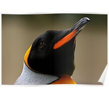 King Penguin Portrait Poster