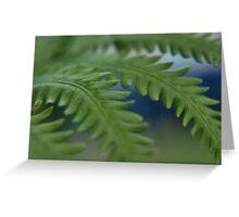 Fern Leaves Greeting Card