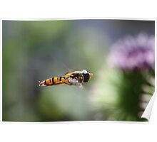 hover fly 2  Poster