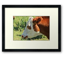 Brown and White Cow on the Prairies Framed Print