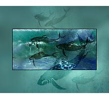 Playful Porpoise Photographic Print