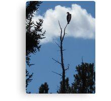 osprey silhoutte Canvas Print