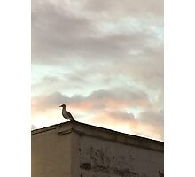 The Lonely Gull in the Clouds Photographic Print
