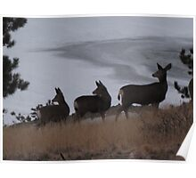 Three deer night Poster