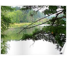 View through the trees Poster