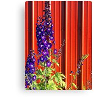 A Clash of Beauty (Lupines) Canvas Print