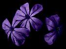 3 Violet Void by Scott Mitchell