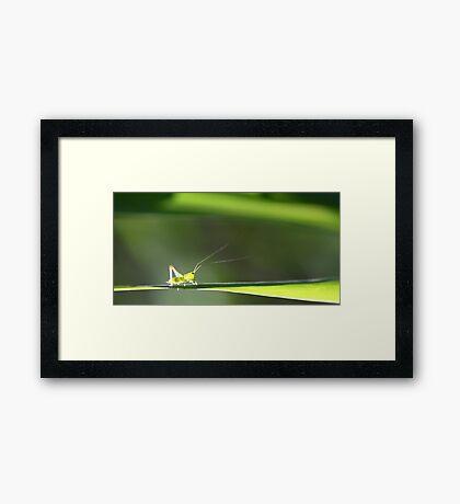 Leaf Walker Framed Print