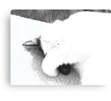 Catnapping Clifford Canvas Print
