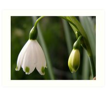 'A LAMP SHADE!' by Nature, Snowdrop time. Art Print