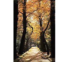 Ginkgo biloba trees Photographic Print