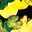 Water lily leaves by Gaspar Avila
