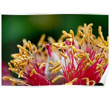 Peony Stamens Poster