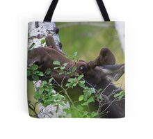 Young bull moose is back for dinner Tote Bag
