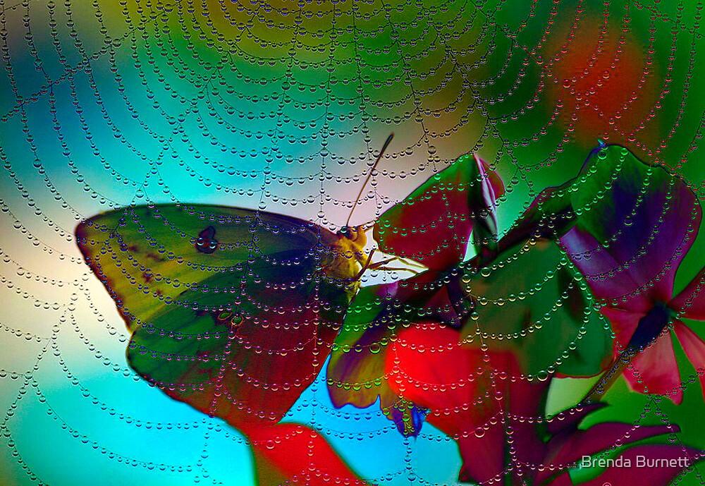 Kaleidoscope Of Colors by Brenda Burnett