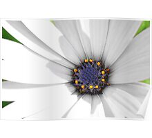 Shadowy flower Poster