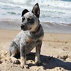 puppy at the beach by elladoor