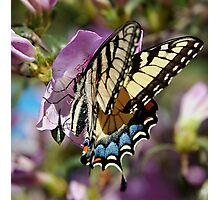A Sip of Nectar Photographic Print