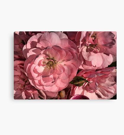 In the Pink with Roses Canvas Print
