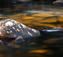 Franklin River, Tasmania  by David Jamrozik