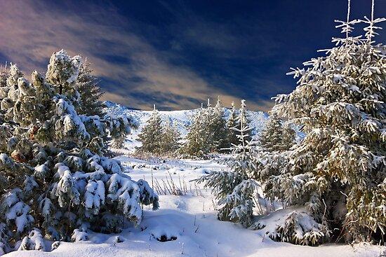 winter paradise by plamenx