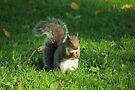 Grey Squirrel, Bute Park, Cardiff by Artberry