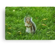 Startled Grey Squirrel, Bute Park, Cardiff Canvas Print