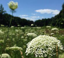Planting Fields Arboretum  by ElasticEARTH