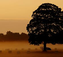 silhouette of oaky by snapitnc
