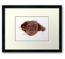 My little puppy Framed Print