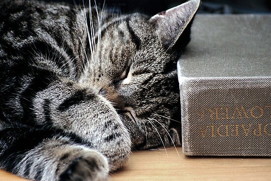 Cat Sleeping on Flower Book by simpsonvisuals