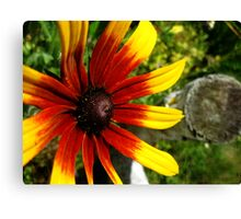 Rubeckia Sunshine Canvas Print