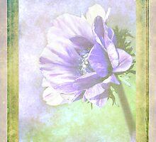 Anemone by Linda Lees
